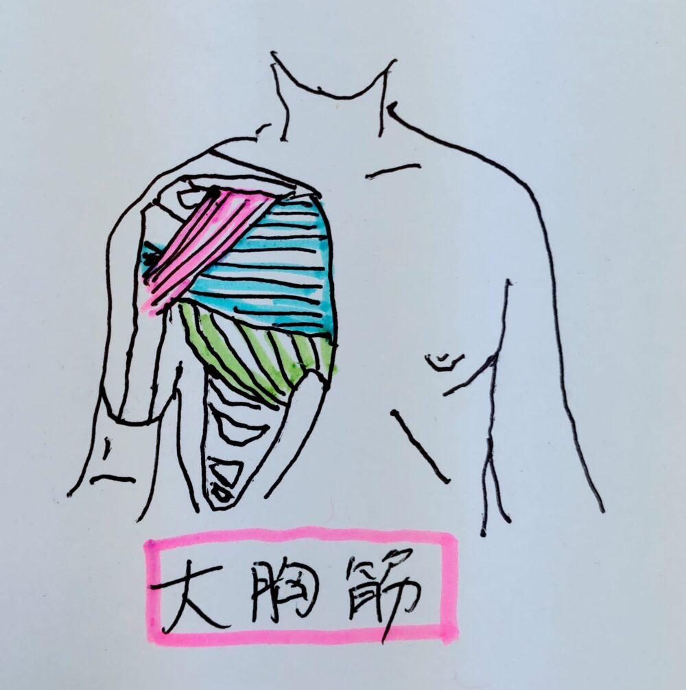 左胸の痛みの原因となる大胸筋