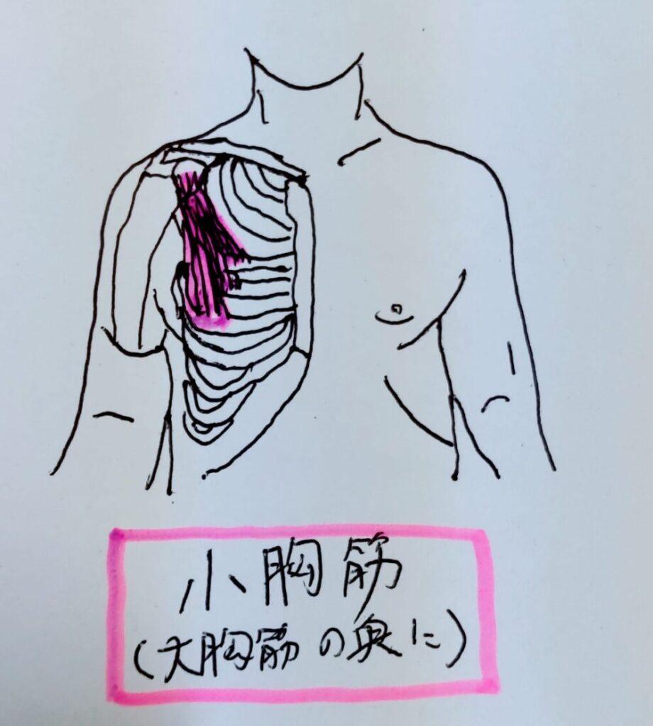 左胸の痛みの原因となる小胸筋