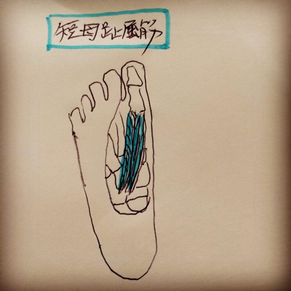 「外反母趾(足親指)の痛み」の原因となる短母指伸筋